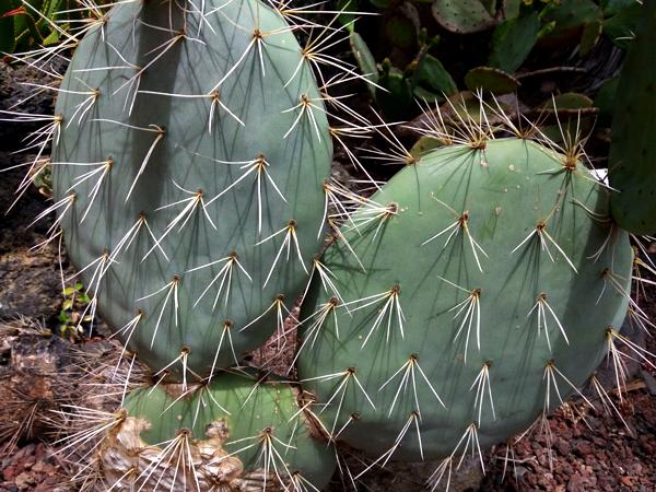 orto botanico Gran Canaria