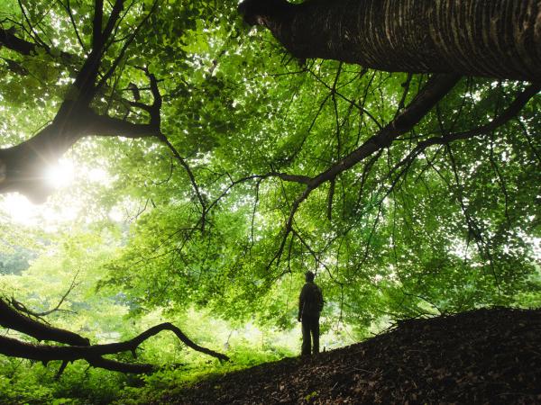 proprietà benefiche della natura